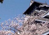 さくら 三名城を訪ねて〜熊本城〜