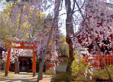さくら 日本列島名所を訪ねて〜兼六園・金沢城公園周辺〜