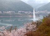 さくら 日本列島名所を訪ねて〜市房ダム湖畔〜