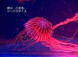 AQUARIUM RELAXATION 〜奇妙な生き物Part2〜