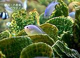 AQUARIUM RELAXATION 〜珊瑚に暮らす魚たち〜