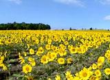 北海道 Summer Days 4th 〜天国の花園〜