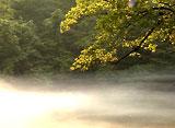 森林浴〜白神山地〜