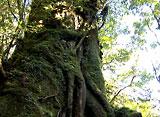 森林浴〜屋久島〜