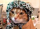 チワトラ! ショートムービー 泥棒ネコ