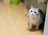 うにの秘密基地 猫らしい動きをしてみよう