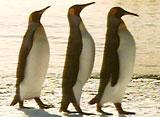 ペンギン・シアター キングペンギン