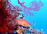 美しき日本12 亜熱帯の海と珊瑚の楽園