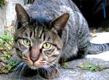 路地猫 スギナミ ロジウラ