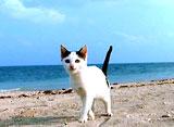路地猫 オキナワ ロジネコ