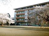 卒業桜 さくら映像詩 土浦市立真鍋小学校 (茨城)