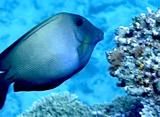 海からのメッセージ 魚の生態観察 食事編