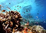 海からのメッセージ 魚の生態観察 身を守る編