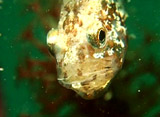 海からのメッセージ 魚の生態観察 繁殖編