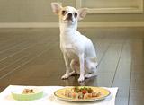 愛犬とハッピーに長生きするレシピ チワワ