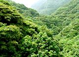 日本の原風景6 有明海にそそぐ美しき渓流 〜長崎県・轟渓流〜