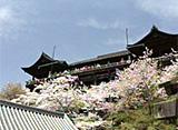 日本の原風景28 桜・桜・桜 〜京都〜
