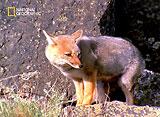 野生の楽園:パタゴニア:地上の果てに生きる