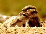 野生の楽園:エトシャ:アフリカの荒々しい大自然