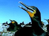 野生の楽園:ナミブ:アフリカの灼熱の岸辺