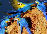 野生の楽園:マヌ:ペルーの秘境、熱帯多雨林