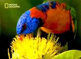 野生の楽園:カカドゥ:オーストラリアの古き野生の地