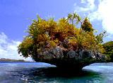 野生の楽園:パラオ:太平洋のパラダイス