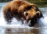 野生の楽園:カムチャッカ:シベリアの氷の半島