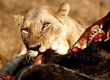 野生の楽園:ンゴロンゴロ:アフリカの巨大クレーター