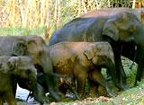 野生の楽園:アナマライ:インド、ゾウの山