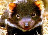 野生の楽園:タスマニア:原始の楽園
