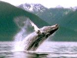 野生の楽園:グレーシャー:アラスカ、大自然の海岸