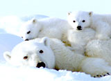 野生の楽園:北極のオアシス:カナダ・サウサンプトン島