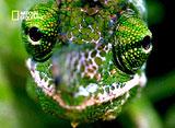 野生の楽園:マダガスカル:切り取られた世界