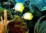 サバイバル・ワールド〜弱肉強食の実態〜 #2 岩礁(日本語吹替版)