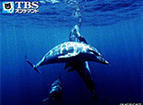 Dolphin Swims〜ドルフィンスイム〜