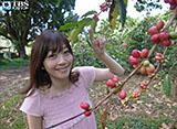 久保田智子のハワイ島 コナコーヒー紀行
