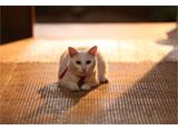 猫侍 #9