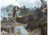 TBSオンデマンド「兼高かおる世界の旅 #389 インドの象」