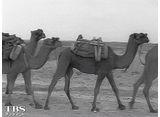 TBSオンデマンド「兼高かおる世界の旅 #343 アフガニスタンのスナップ」