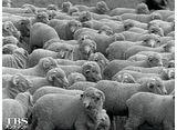 TBSオンデマンド「兼高かおる世界の旅 #63 羊毛の国」