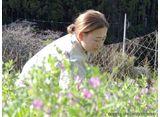 カンテレドーガ「セブンルール #202 野山に咲く花の専門店!人気の秘密」