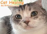 Cat Healing ねこちゃんといっしょ