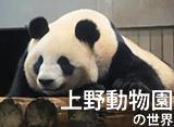 上野動物園の世界