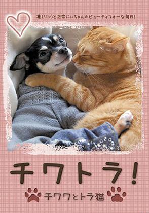チワトラ!☆チワワとトラ猫