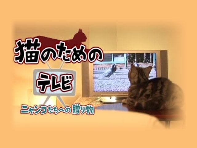 猫のためのテレビ