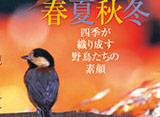 野鳥歳時記・春夏秋冬